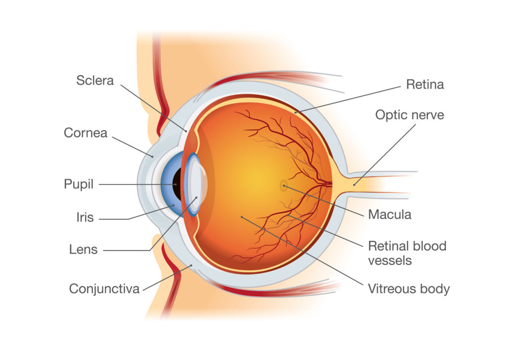 Corneal Services Long Beach | Vision Disorders Los Angeles
